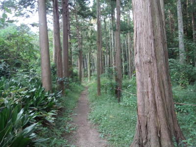 photo_randner_niiharunomori_aki_1017_6_2015_1017.jpg