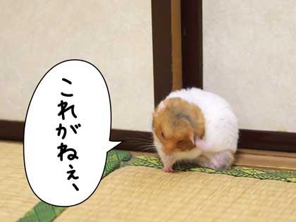 fuki5.jpg