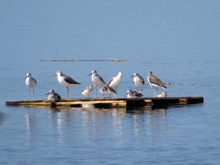 南港野鳥園・秋 (1)