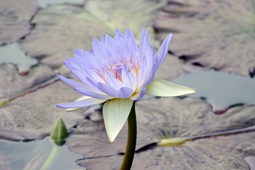 京都府立植物園 (2)