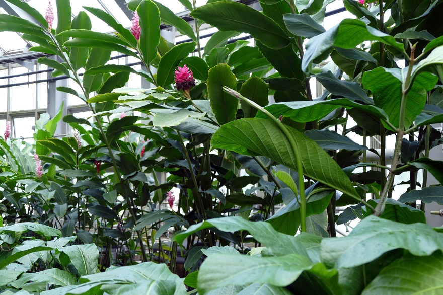 京都府立植物園 (8)