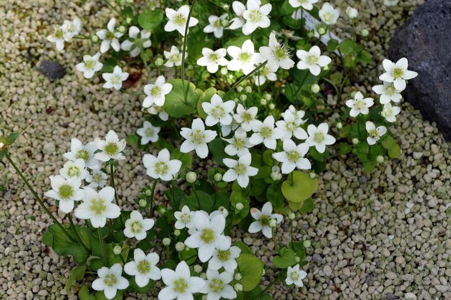 京都府立植物園 (9)