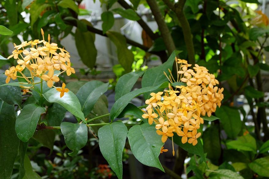 京都府立植物園 (10)
