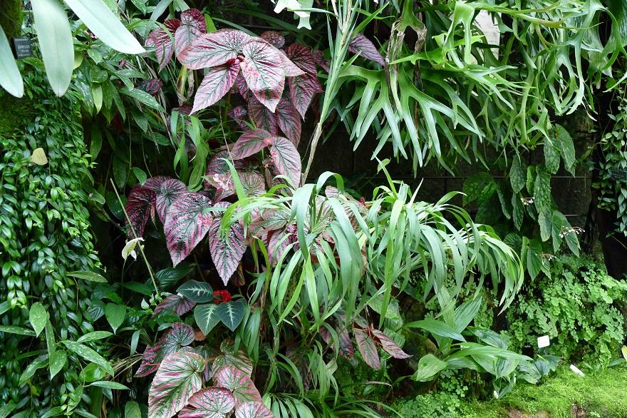 京都府立植物園 (19)