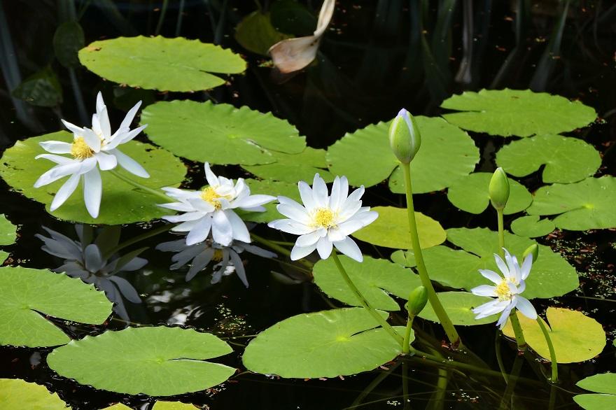 京都府立植物園 (21)