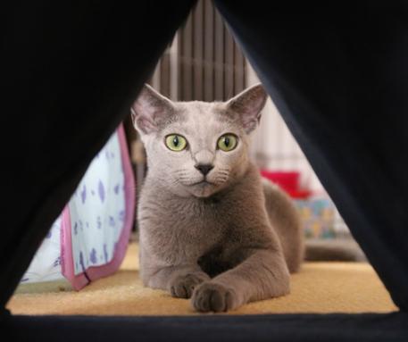 三角トンネル