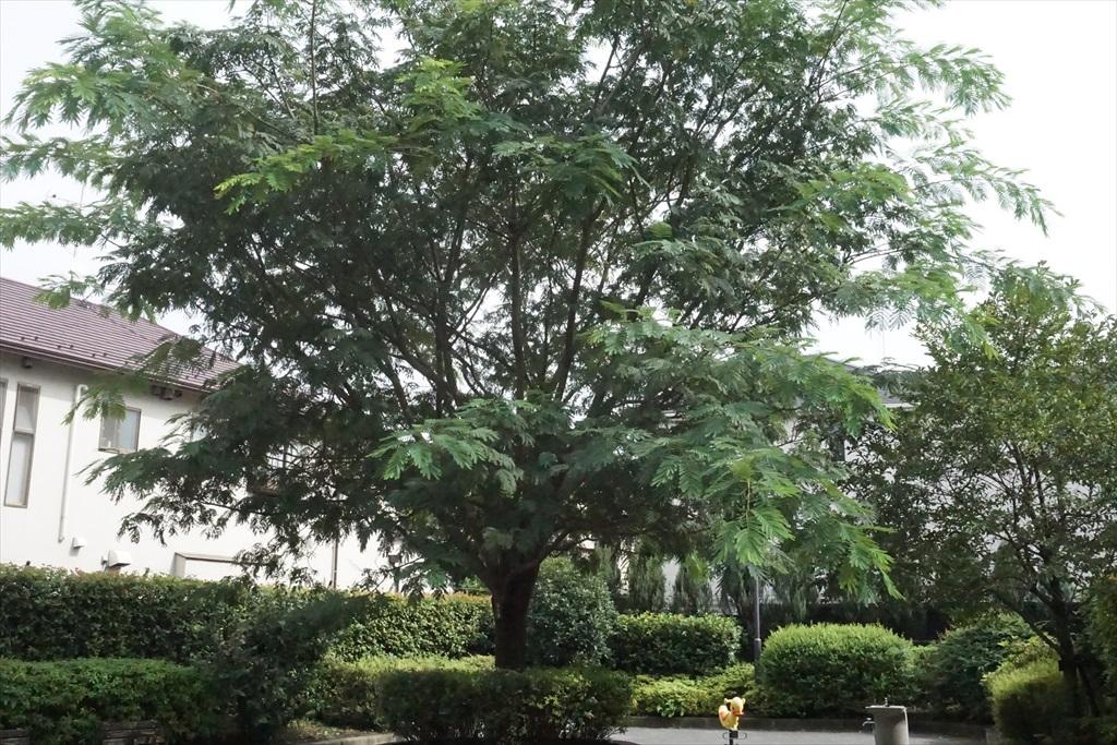 公園にある樹木_1