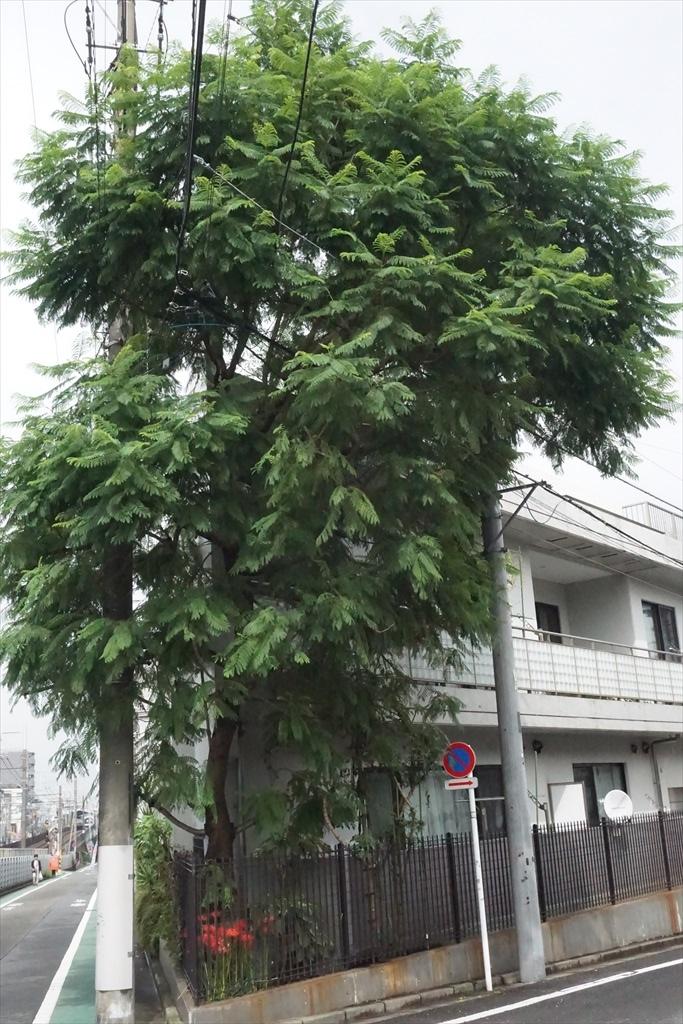 隣りにある樹木_1