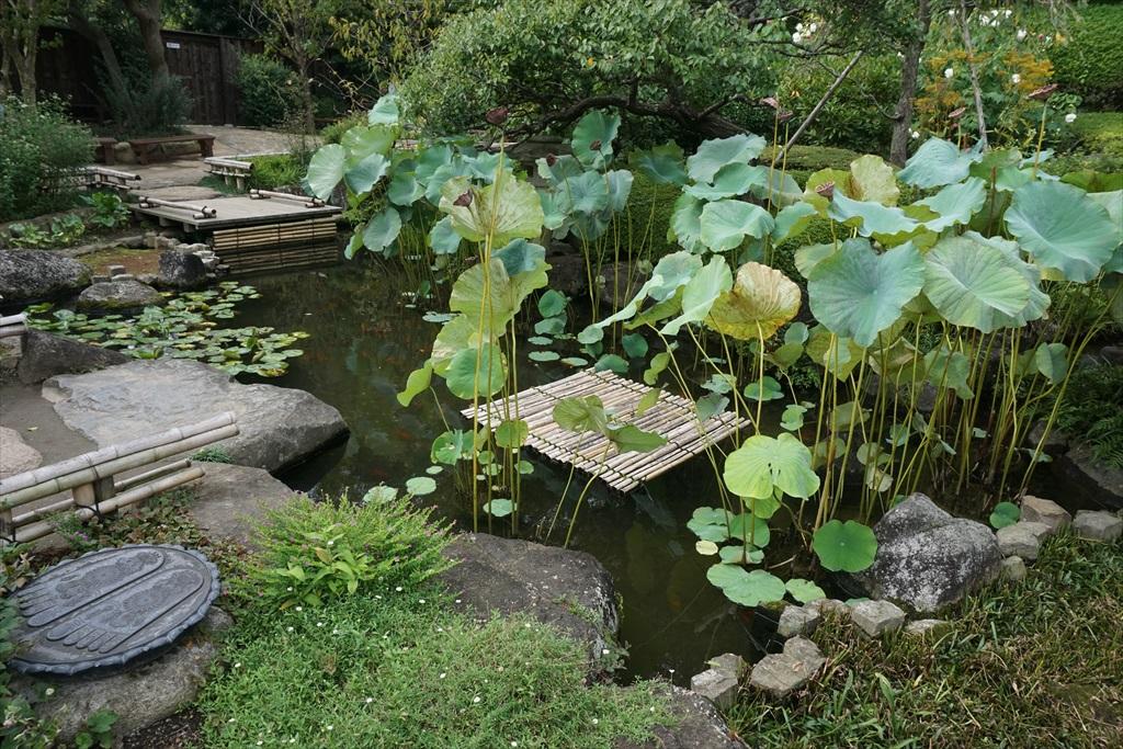 2つの池_1