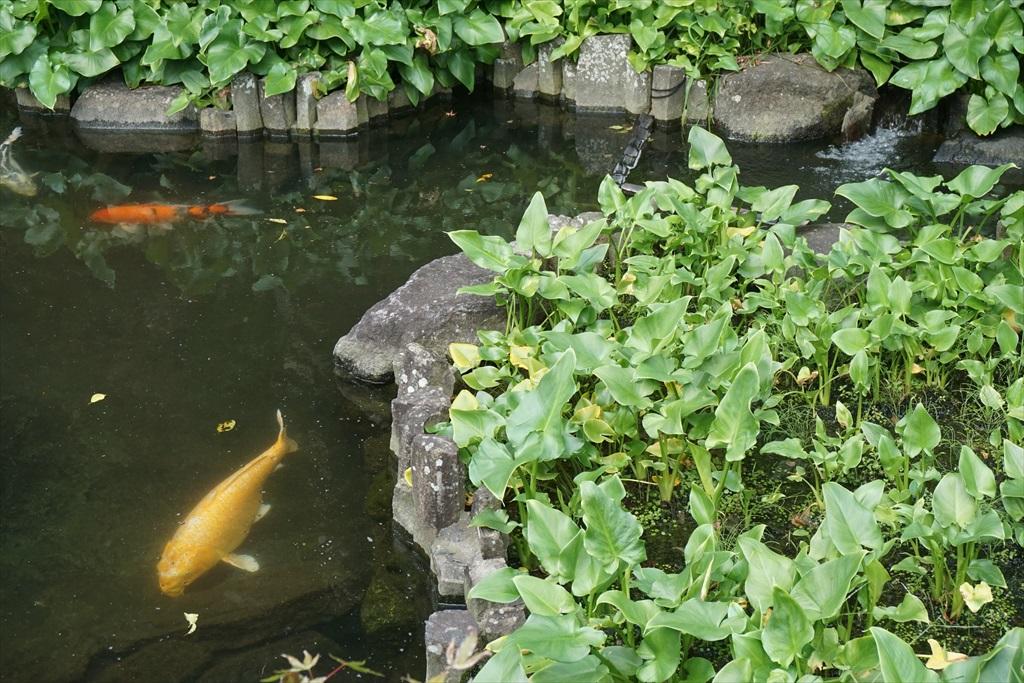 2つの池_4