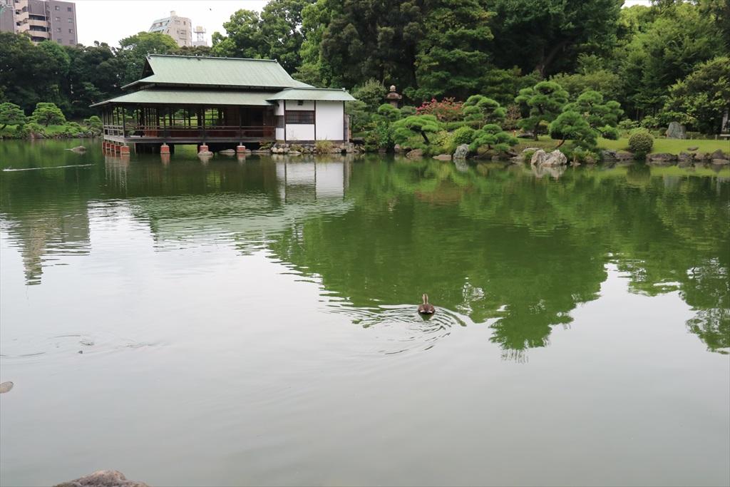 美しい池の景観(4)_5