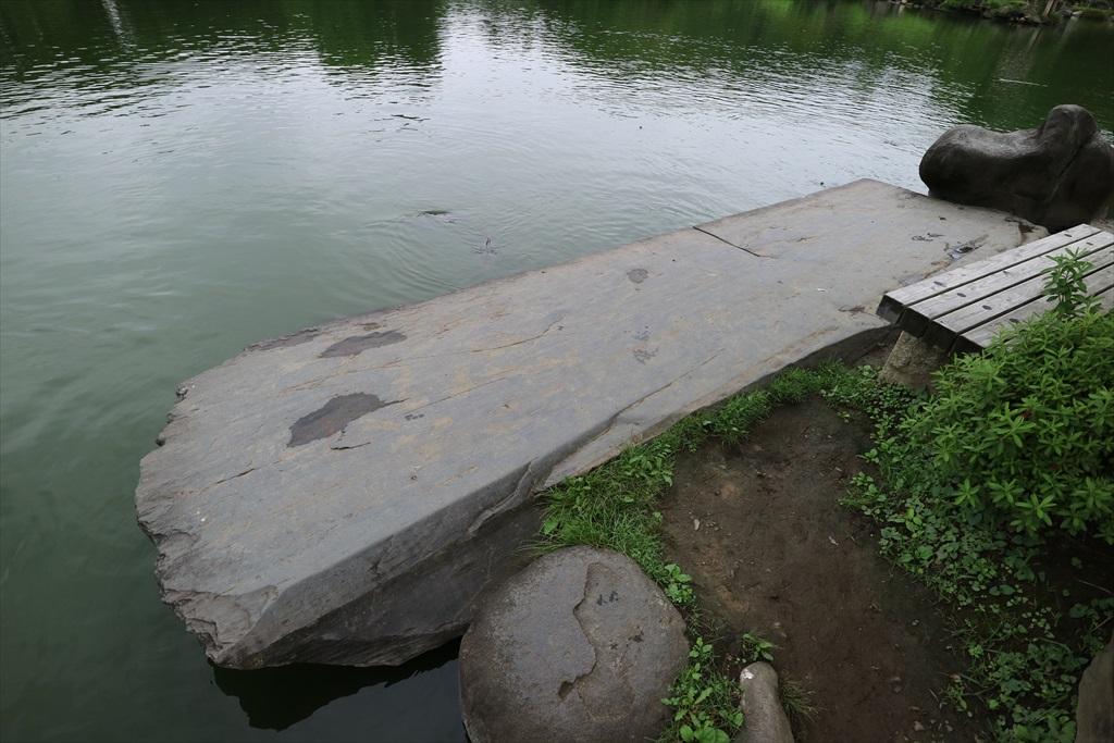 美しい池の景観(4)_33
