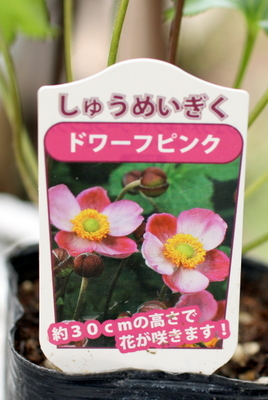 秋明菊ラベル