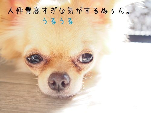 P6290022.jpg