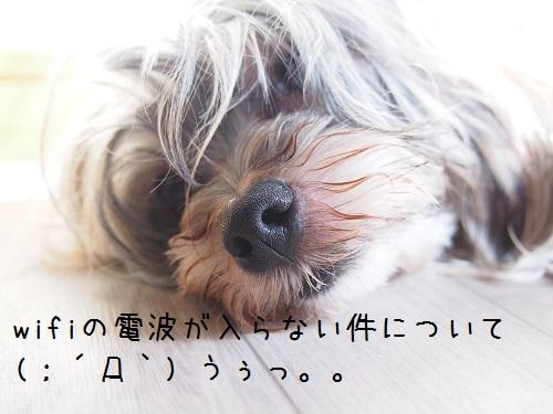 P6290033.jpg