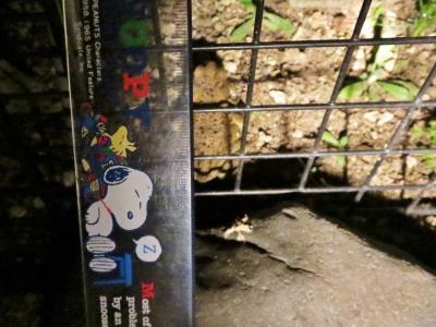 蛙肥ゆる秋 (3)