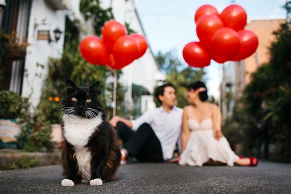 cat-engagement-photo.jpg