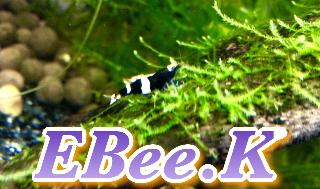 EBee.K