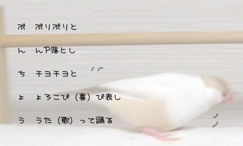 ラテ欄風縦読みで文鳥_2