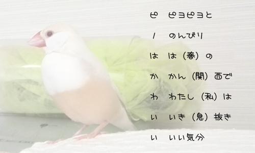 ラテ欄風縦読みで文鳥_3