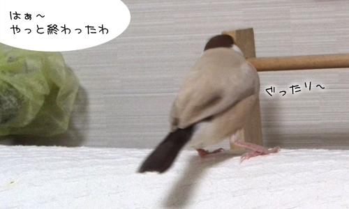 美容師ちゃちゃの挑戦_1