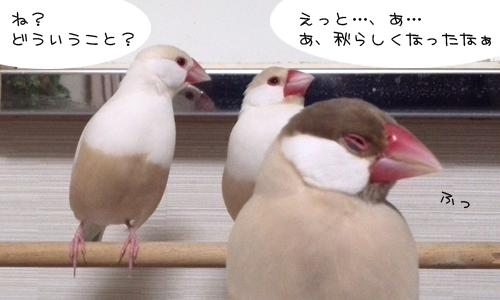 幸せな文鳥の育て方に掲載♪_3