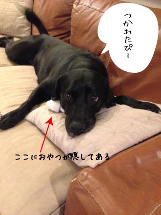 ヘターとなる犬