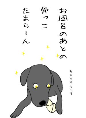 キラキラの犬