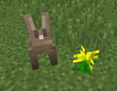 アンケートウサギ