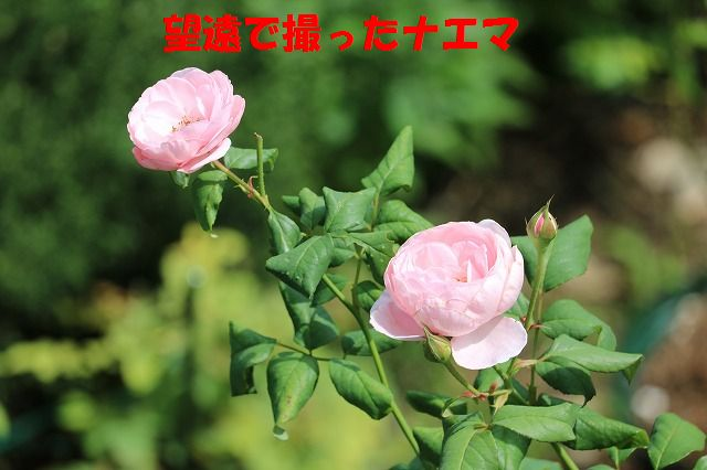 IMG_0234_201509151927408a6.jpg