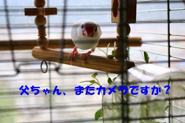 IMG_0291.jpg