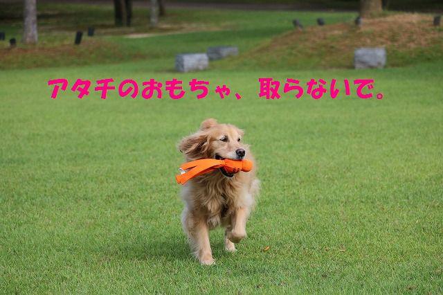 IMG_0734_20150920140802adf.jpg