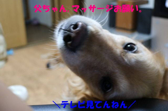 IMG_1292_201509251922535b2.jpg