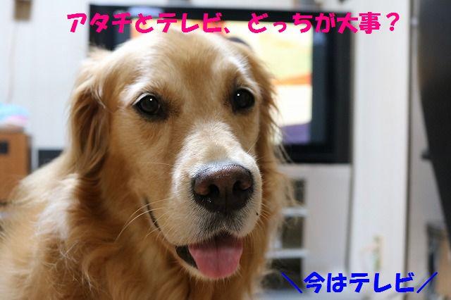 IMG_1311_20150925192254e4b.jpg