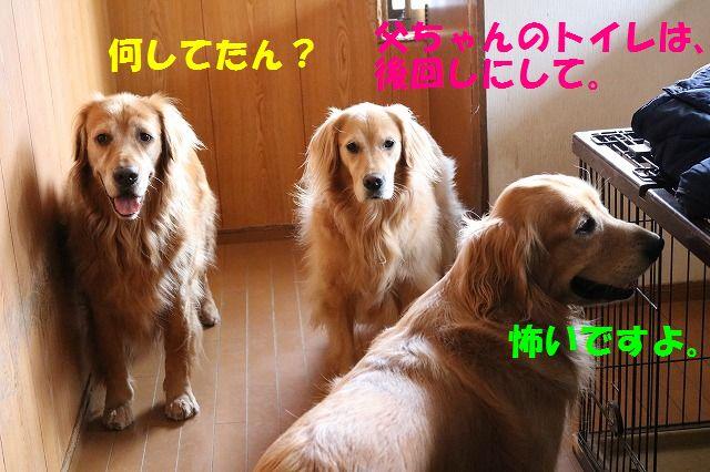 IMG_1466.jpg