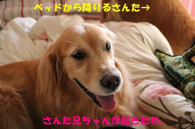 IMG_2311_20151002204313d60.jpg