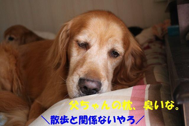 IMG_2330.jpg