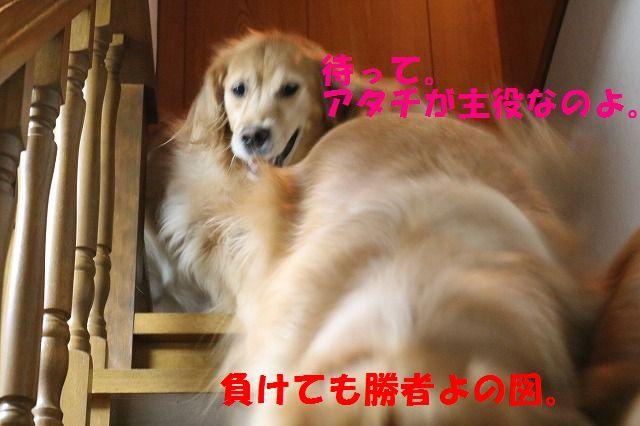 IMG_3162.jpg