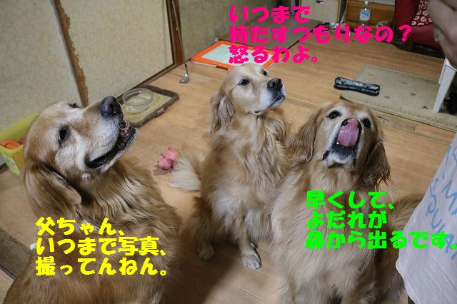 IMG_3785.jpg