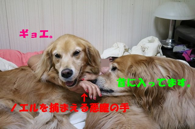 IMG_3920.jpg