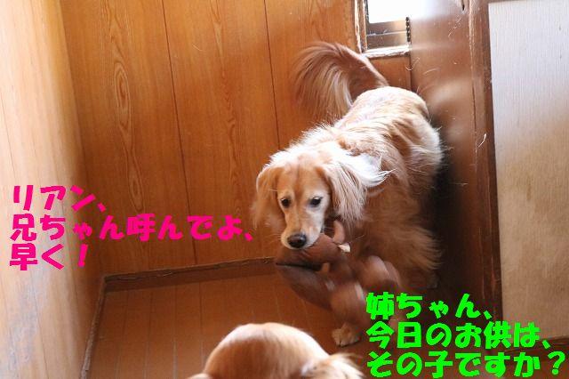 IMG_3954.jpg