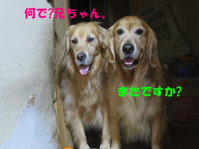 IMG_6156.jpg