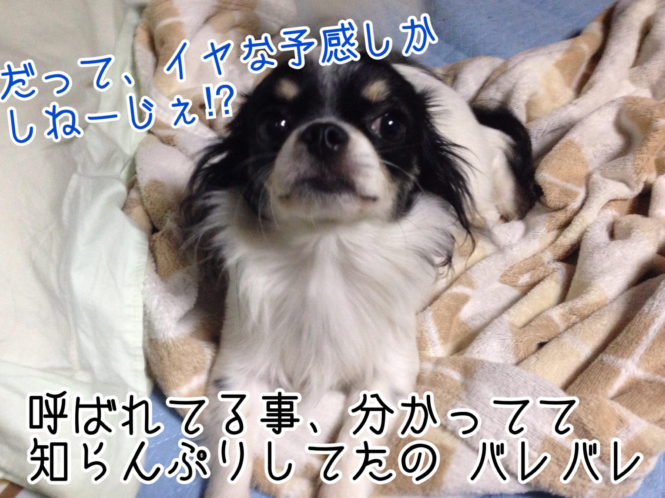 fc2blog_2015092511492590e.jpg