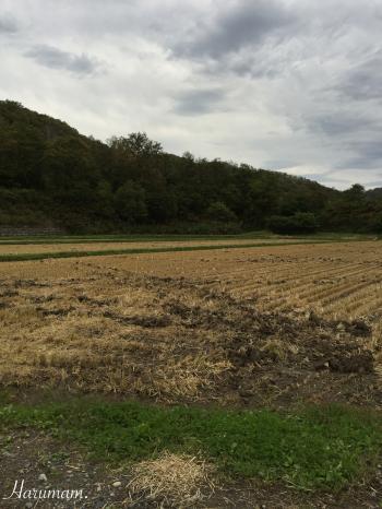 稲刈り終了と爆弾低気圧