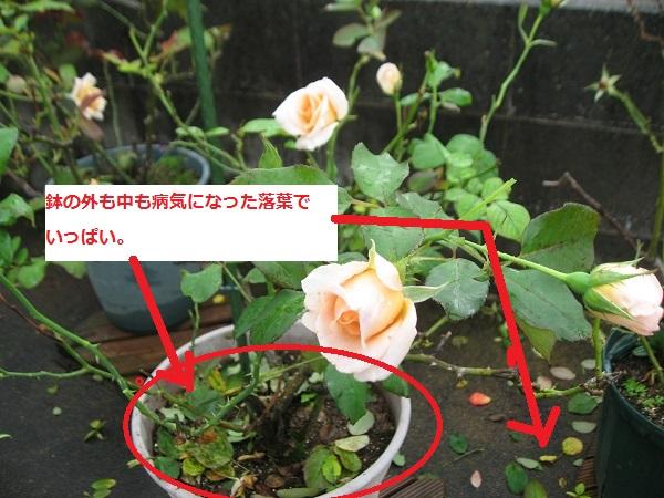 IMG_7411.jpg