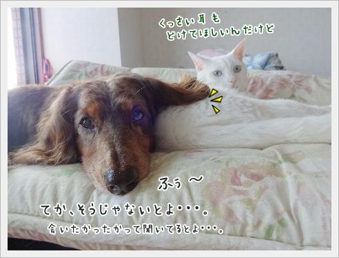 fc2_2015-8-24_04.jpg