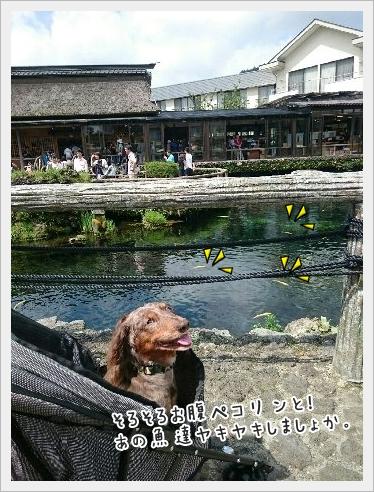 fc2_2015-9-8_01.jpg