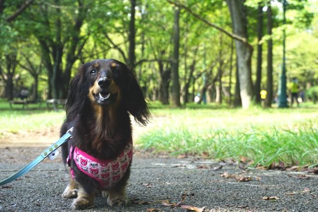 彩の森入間公園 (4)