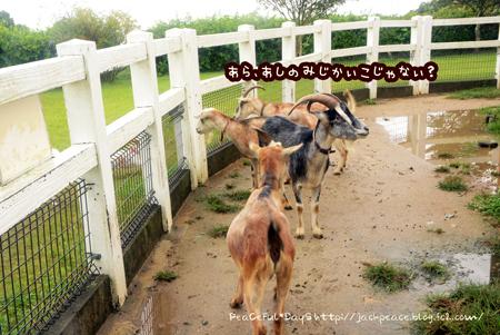150903_nokami1.jpg