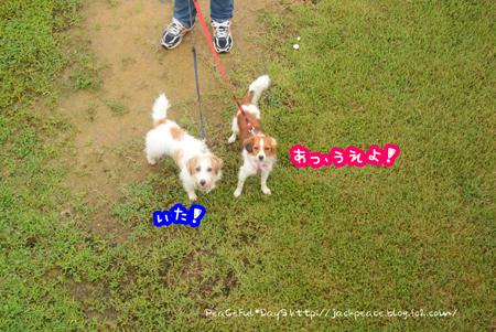 150903_nokami10.jpg